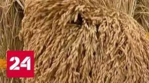 Бизнес на пшенице. Россия вышла на первое место по экспорту